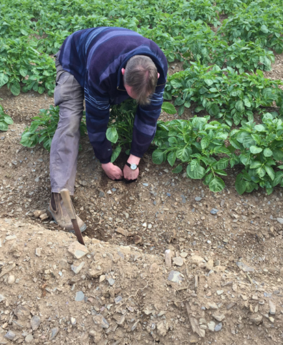 Keogh's Farm; Blog; Food; Kale; Brocolli